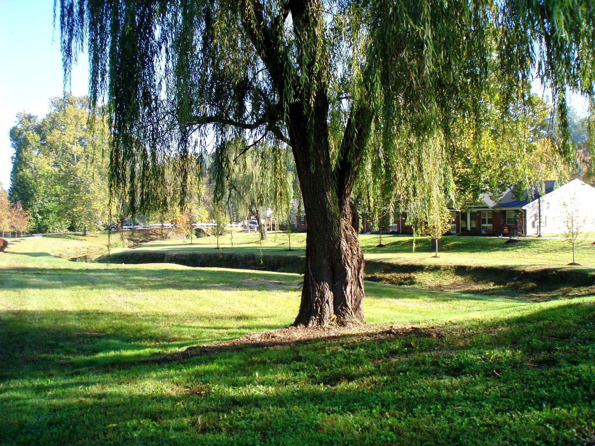 Ashland Terrace Landscaping